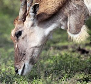 Audubon and San Diego Zoo begin animal breeding center in Algiers